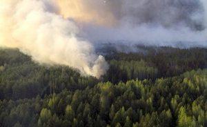 В области горело 30000 квадратных метров Соловьиной рощи