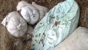Невозможное возможно: В Мелитополе мужчина украл две тонны зерна – сам и без машины