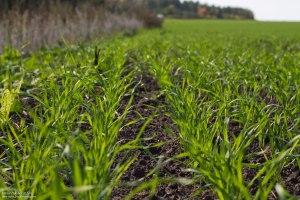 Запорожская область вошла в пятерку лидеров по посеву ранних зерновых