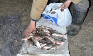 Тысячи гривен ущерба, сотни килограммов рыбы и столько же сетей – браконьеры «забили» на нерест