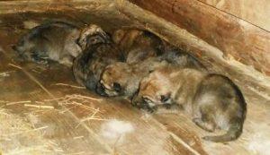 Ми-ми-ми: В бердянском зоопарке показали фото новорожденных волчат и пони (ОБНОВЛЕНО)
