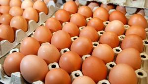 Житель Энергодара купил несуществующие куриные яйца за 15 тысяч гривен