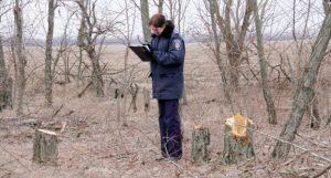 В Запорожье будут судить 15 нелегальных дровосеков, уничтоживших лесополосы