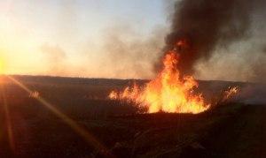 В Запорожской области орудуют поджигатели - видеорепортаж с места событий