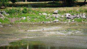В Дубовой Роще рассказали, когда восстановят малое озеро – фото