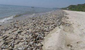 В Бердянске начали мелиоративный лов рыбы: бычок подошел к берегу