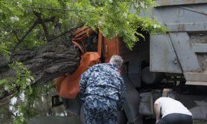 В Запорожье рухнувшее дерево