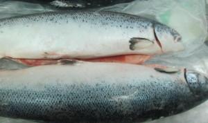 Налоговая конфискует у запорожского бизнесмена 520 тонн лосося и форели