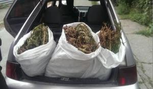 Запорожец разъезжал по городу с 70 кг снотворного мака в багажнике (ОБНОВЛЕНО)