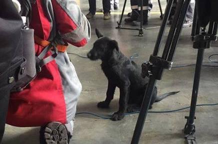На Запорожстали послушать брифинг министра экологии пришел щенок - ФОТОФАКТ