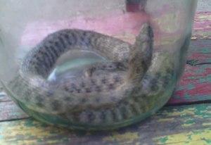 В Мелитополе во дворе многоэтажки дети словили змею