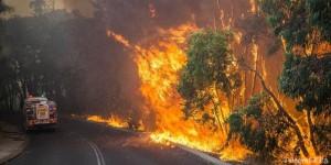Спасатели: Высокая и чрезвычайная пожароопасность сохранится до пятницы