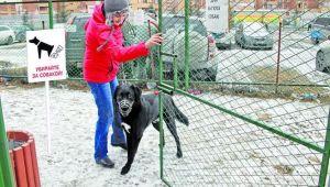В Запорожье может появиться первая площадка для выгула собак