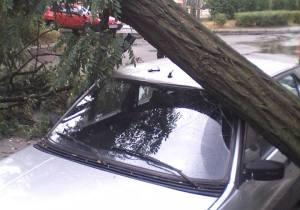 В Энергодаре штормовой ветер повалил дерево на иномарку