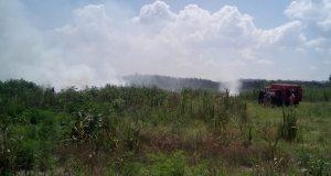 В Запорожской области выгорело 4000 квадратных метров леса
