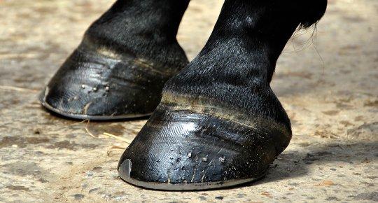 Лошадь, катавшая в Бердянске отдыхающих, оттоптала женщине ноги - ФОТО