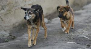 Сколько бездомных животных в Запорожье?