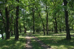 В Дубовой Роще посчитают количество деревьев за 700 тысяч гривен