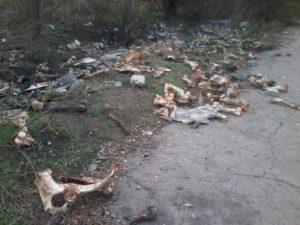 В одном из районов Запорожья нашли свалку костей - ФОТО 18+
