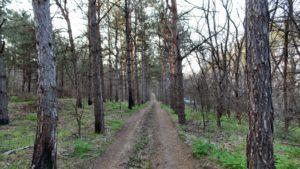 Константин Брыль принялся спасать запорожский лес