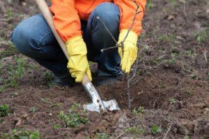 До конца года в Запорожье высадят 3,5 тысячи деревьев