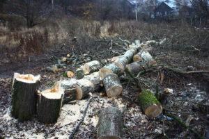 В Запорожской области местная власть занимается незаконной вырубкой леса - ВИДЕО