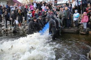 В Запорожье эко-активисты спасали Днепр - ФОТО