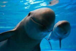 Стала известна причина гибели дельфинов на Запорожье