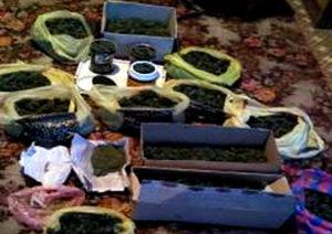 У жителя Запорожской области нашли марихуану на 650 тысяч гривен
