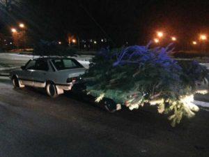 Предприимчивый запорожец срубил более 40 елок и перевозил их ночью в БМВ - ФОТО