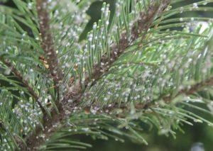 В Запорожье спасли от вандалов более 600 хвойных деревьев