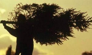 В Запорожье пьяные воeнные украли две елки - ВИДЕО