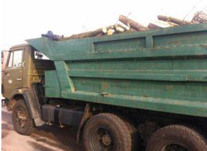 В посадке незаконно вырубили деревья и вывозили их на грузовике, как дрова