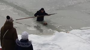 В Запорожской области смельчаки снова спасли провалившуюся под лед собаку - ВИДЕО