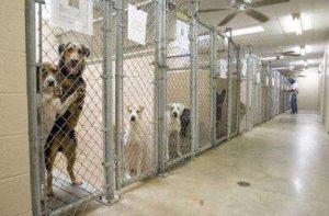 В Запорожье построят приют для бездомных животныхи центр стерилизации
