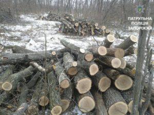 В Запорожье задержали жителей Днепра, которые незаконно вырубали деревья - ФОТО