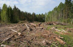 В Запорожской области уничтожают лес: за 2016 год срублено более тысячи гектаров леса