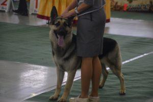 В Запорожье проходит выставка породистых собак - ФОТО