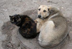 Члены горисполкома поддержали программу обращения с животными