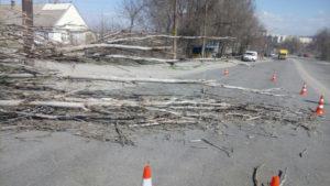 В Запорожье упавшее дерево перегородило проезжую часть - ФОТО
