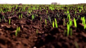 В Запорожье аграрии боятся штрафов за работников-нелегалов