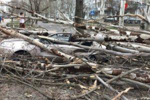 В Запорожской области упавшее дерево буквально раздавило легковушку - ФОТО