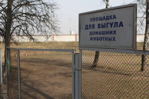 Депутаты не поддержали петицию о зонах для выгула животных