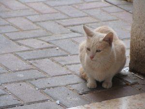 Петиция о признании бездомных котов частью экосистемы Запорожья набрала необходимое количество подписей
