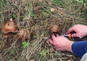 В Запорожском районе женщина, собирая грибы, нашла гранаты - ФОТО
