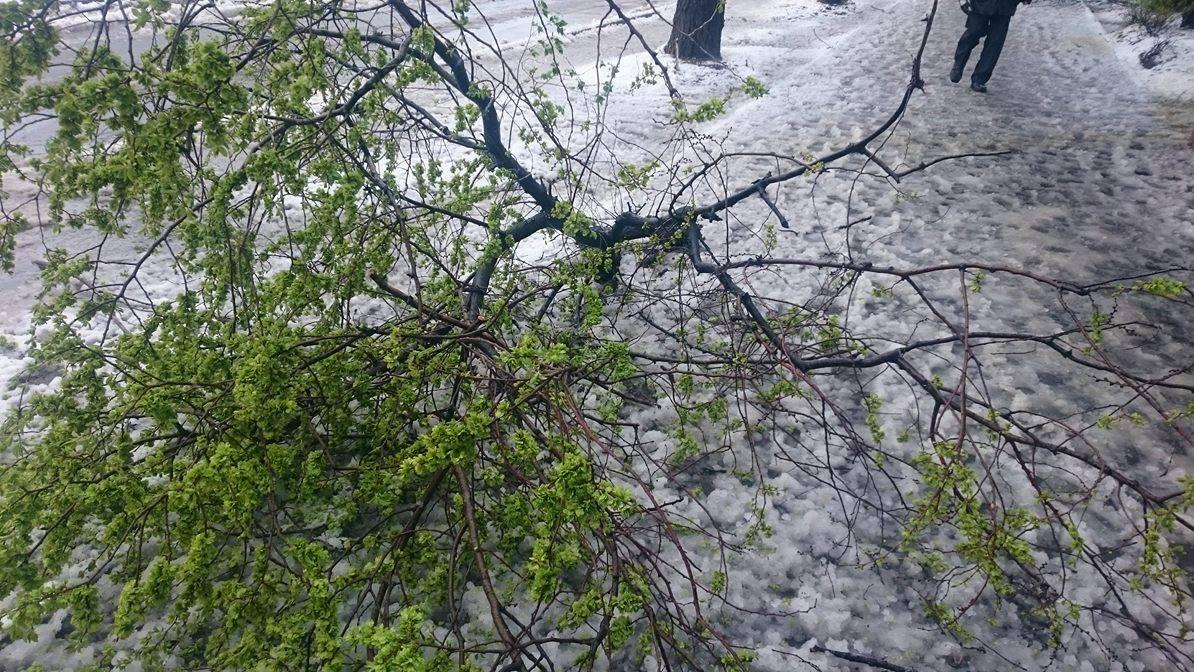 Спустя неделю после стихии, коммунальщики не могут убрать поваленные деревья и ветви