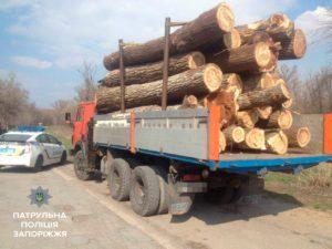 В Запорожье незаконно спиливали и вывозили деревья - ФОТО