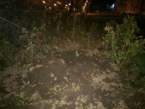 В Запорожье возле здания мэрии выкопали кусты роз - ФОТО