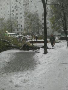 Запорожье засыпало снегом: из-за непогоды массово падают деревья - ФОТО