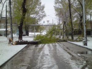 Запорожские спасатели уже убрали более 100 упавших деревьев - ФОТО